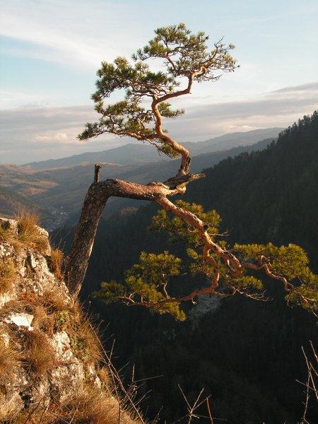 migawka górska